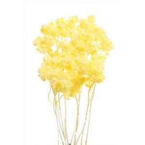 ドライフラワー 花材 クリスパム エンジェルイエロー 15g|solargift