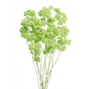 ドライフラワー 花材 クリスパム エンジェルグリーン 15g|solargift