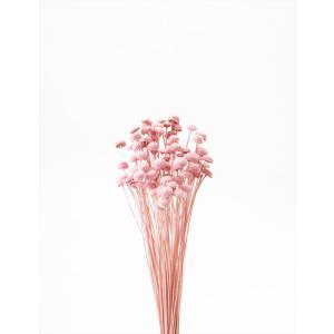 ボタンフラワー キャンディピンク 袋 約22g入 花材 材料 大地農園|solargift