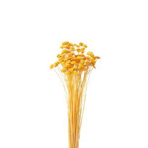 ボタンフラワー ゴールデンイエロー 袋 約22g入 花材 材料 大地農園|solargift