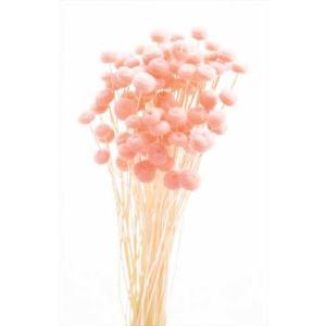 ドライフラワー 花材 アマレリーフラワー ピンク 約100本|solargift
