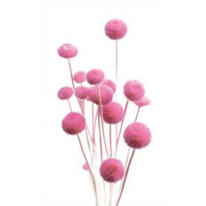 ドライフラワー 花材 アマレリーフラワー ライラックピンク 約100本|solargift