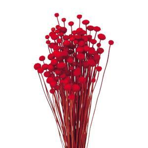 ドライフラワー 花材 アマレリーフラワー レッド 約100本|solargift