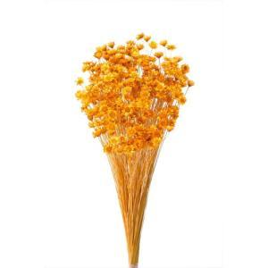 ドライフラワー 花材 スターフラワーブロッサム オレンジ 約18g 大地農園|solargift