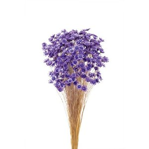 ドライフラワー 花材 スターフラワーブロッサム ライトパープル 約18g 大地農園|solargift