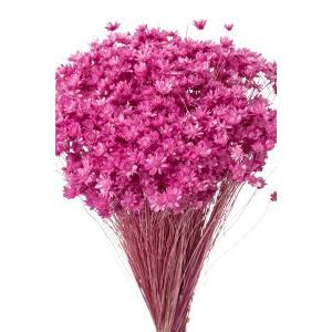 大地農園 ドライフラワー 花材 スターフラワー ミニ ストロベリー 約12g|solargift