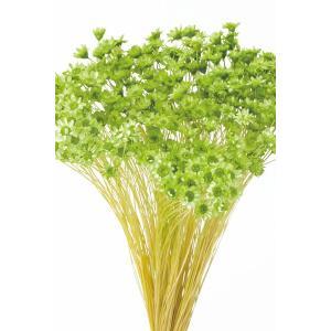 大地農園 ドライフラワー 花材 スターフラワー ミニ アップルグリーン 約12g|solargift