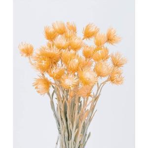 ミニシルバーデージー ツートンオレンジ 32001-350 大地農園|solargift