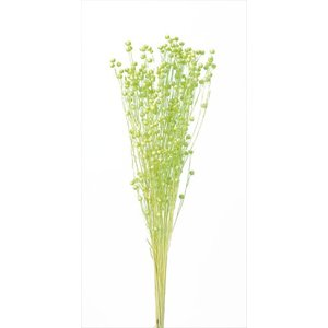 プリザーブドフラワー 花材 リンフラワー アップルグリーン 約25g 大地農園 solargift