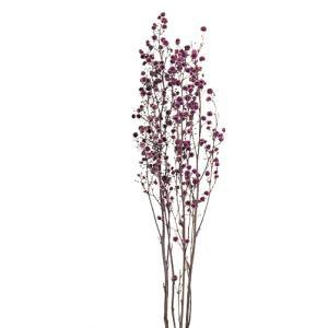 プリザーブドフラワー 材料 スターリンジャー パープル 袋 約70g入 プリザーブドフラワー 花材 大地農園|solargift
