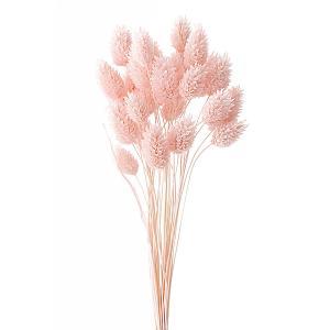 ドライフラワー 花材 ポアプランツ ベビーピンク 約15g 大地農園|solargift