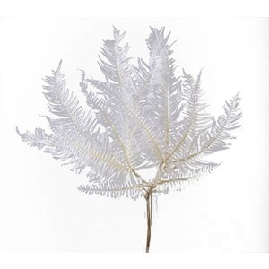 プリザーブド 花材 山シダ 白 約20枚 リーフ 大地農園の画像