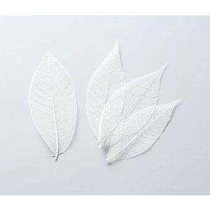大地農園 ドライフラワー 花材 ミニスケルトンリーフ 大 白 約40枚|solargift