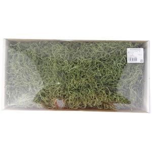 スパニッシュモス 大 グリーン 箱 約220g入 プリザーブドフラワー 材料 大地農園|solargift