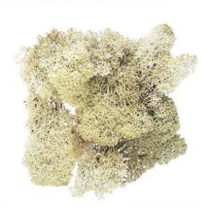 アイスランドモス ナチュラル 箱 約500g入 プリザーブドフラワー 材料 花材 大地農園|solargift