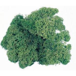 アイスランドモス モスグリーン 箱 約500g入 プリザーブドフラワー 材料 花材 大地農園|solargift
