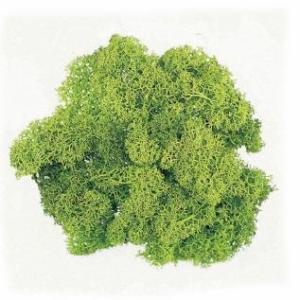 アイスランドモス スプリンググリーン 箱 約500g入 プリザーブドフラワー 材料 花材 大地農園|solargift