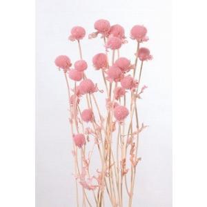 プリザーブドフラワー 材料 モナルダ ピンク 袋 約15g入 大地農園花材|solargift