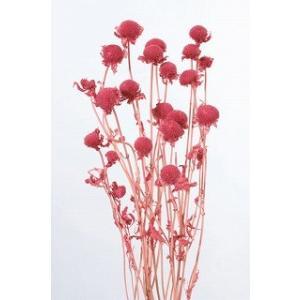 プリザーブドフラワー 材料 モナルダ フランボワーズ 袋 約15g入 大地農園花材|solargift