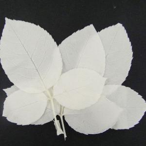 プリザーブドフラワー 材料 ローズリーフ ホワイト 袋 約10枚入 葉 花材 大地農園 solargift