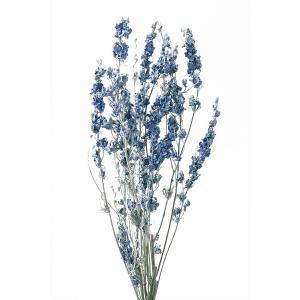 デルフィニューム ウォッシュホワイト 袋 約25g入 花材 材料 大地農園|solargift