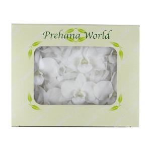 デンファレ ホワイト 箱 6輪入 プリザーブドフラワー 材料 花材|solargift