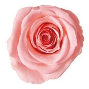 プリザーブドフラワー 花材 アイネスミニ9 ピンクネクター 9輪|solargift