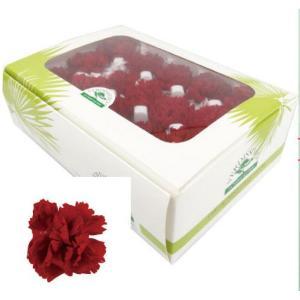 ミニカーネーション レッド 箱 12輪入 プリザーブドフラワー 材料 花材|solargift