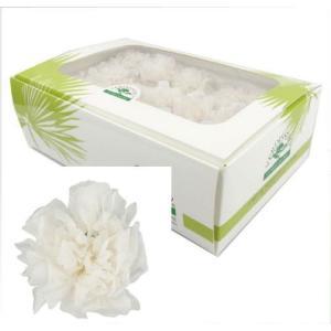 ミニカーネーション パールピンク 箱 12輪入 プリザーブドフラワー 材料 花材|solargift