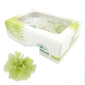 ミニカーネーション フレッシュグリーン 箱 12輪入 プリザーブドフラワー 材料 花材|solargift