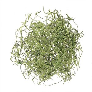 スパニッシュモス グリーン 大袋 約50g入 プリザーブドフラワー 材料 大地農園|solargift
