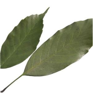 ワイルドリーフ グリーン 袋 25枚入 プリザーブドフラワー 花材 材料  artflor|solargift
