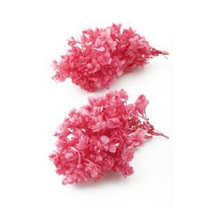 プリザーブドフラワー 花材 カシワバアジサイ ストロベリー 箱 2輪 大地農園|solargift