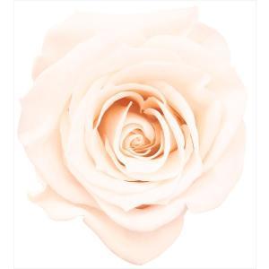 「即納」 ミミローズ 「ホワイトシャンパン 箱 ...の商品画像