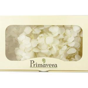 プリザーブドフラワー 材料 花材 HYDRAGEAアジサイ ブライダルホワイト 箱 2輪入 solargift