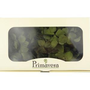 プリザーブドフラワー 材料 花材 HYDRAGEAアジサイ オリーブ 箱 2輪入 solargift