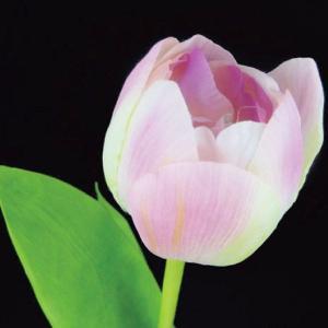 チューリップ ピンクグリーン 1本入 アーティシャル 花材 asca|solargift