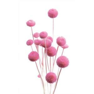 そらプリ ドライフラワー 花材 アマレリーフラワー ライラックピンク 小分け|solargift