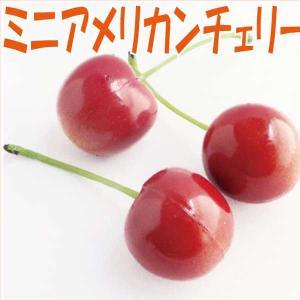 ミニアメリカンチェリー レッド 小分け 3個入 東京堂|solargift