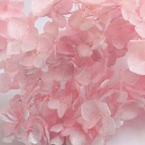 種類:プリザーブドフラワー 商品名:アジサイアナベル スプラッシュ 色:ピンク  商品コード:so-...