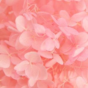 種類:プリザーブドフラワー 商品名:アナベルアジサイ 色:ピンク 商品コード:so-oh-02160...