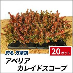 アベリア カレイドスコープ 20ポットセット グランドカバー 生垣 花壇