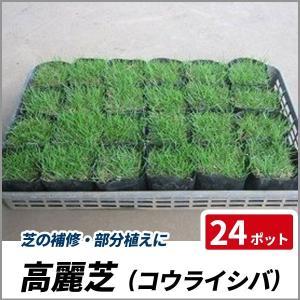 部分的に芝を植えたい、芝の補修をしたい、という方にオススメのポット苗です。  高麗芝は一般的な日本芝...