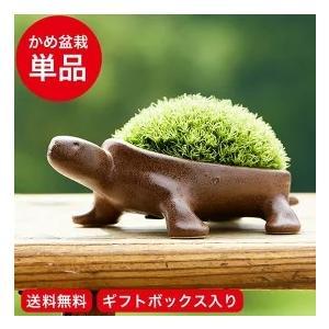 亀盆栽(こけ盆栽 コケ 苔 苔盆栽 ミニ盆栽 盆栽 bons...