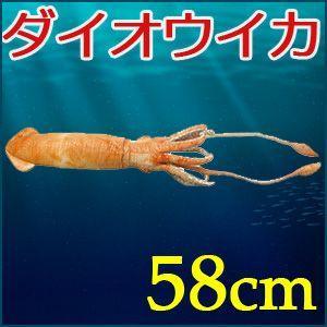 ぬいぐるみ ダイオウイカ 58cm