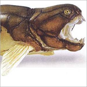 サファリ社 恐竜フィギュア  283329 ダンクレオステウス|soprano