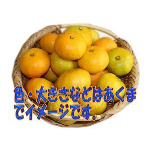 送料無料 長崎県産:極早生みかん 約5kg サイズ(S・M・L)混合|sotome