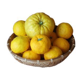 長崎(そとめ)産:柚子(ゆず)普通サイズ&ジャンボサイズ 約2kg sotome