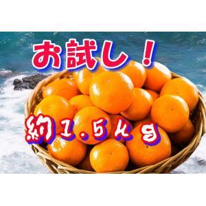 お試し品 長崎県産みかん サイズばらばら約2kg|sotome