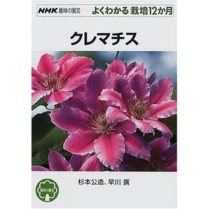 クレマチス  杉本 公造 B:良好 G0550B|souiku-jp